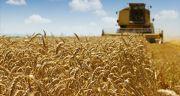 Récolte de blé tendre en 2016